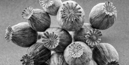 opium b-n